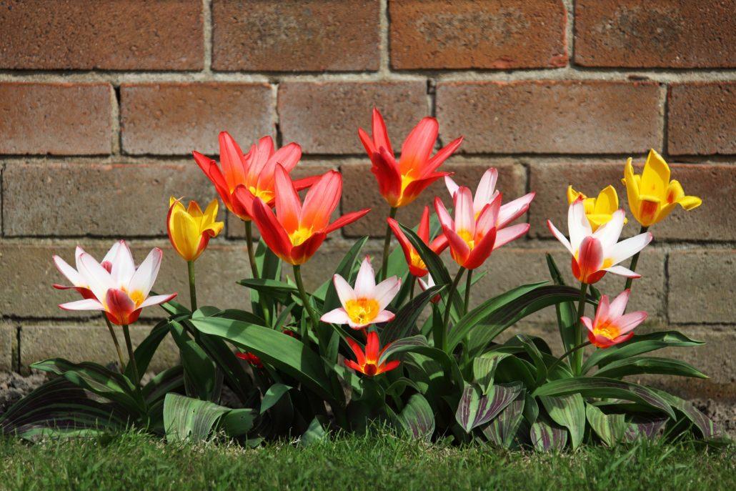Best kept garden